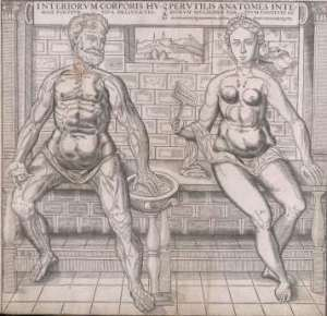 Anatomía de Read, 1559 ca.